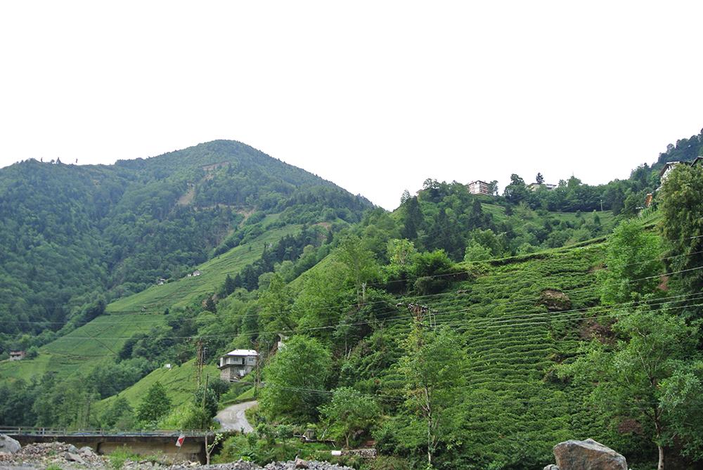 Çay Bahçeleri