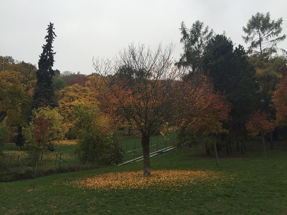 En güzel mevsim Sonbahar :)