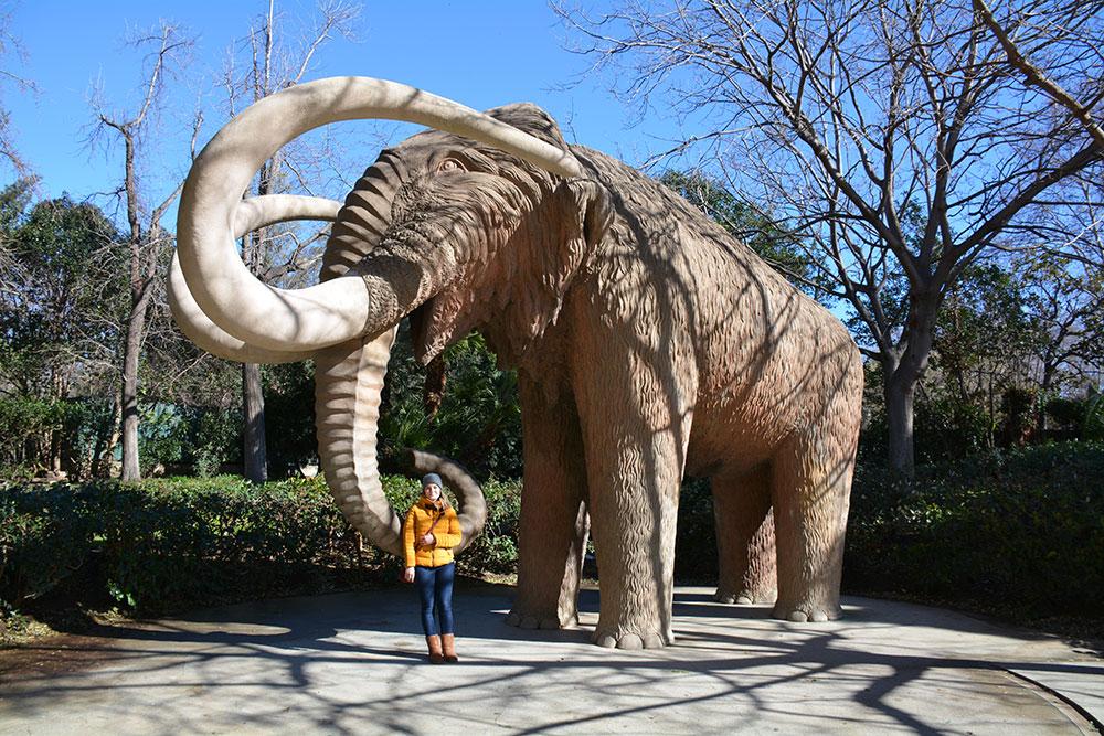Mammut :)